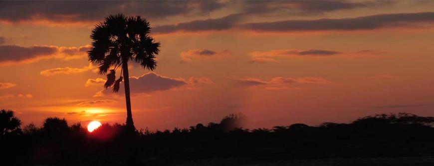The Palmyrah Tree that characterizes Jaffna